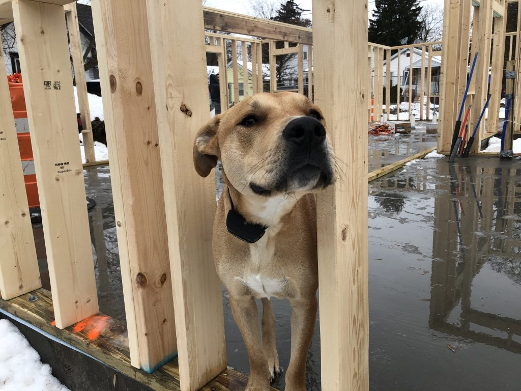 Brady, Lunetta's dog, spends time on the construction site with his owner.