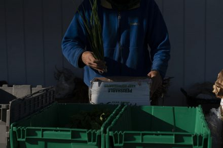An employee of Brady Farm fills a CSA box with fresh produce. In 2020 Brady Farm delivered 60 boxes per week throughout the area filled with everything from winter squash to fresh garlic and tomatoes.