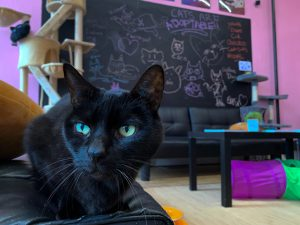 Inside the cat lounge there are a variety of toys, tunnels and towers to entertain the cats.