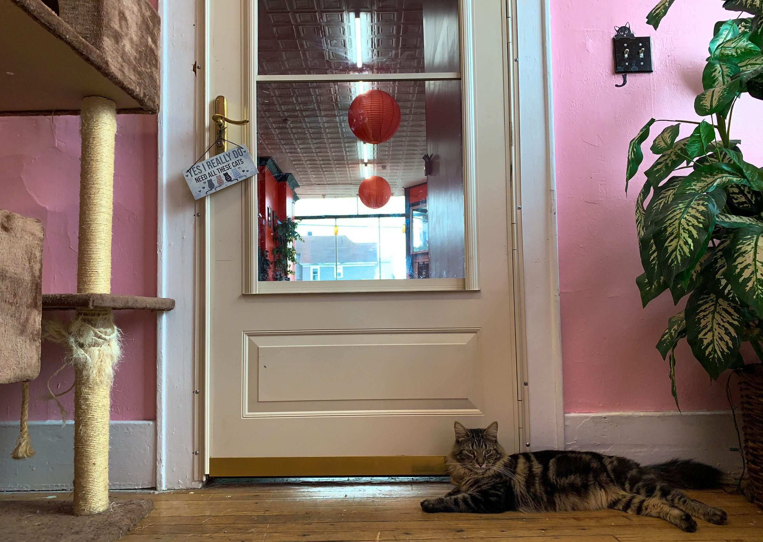 Visitors can enter the cat lounge directly from the dining room.