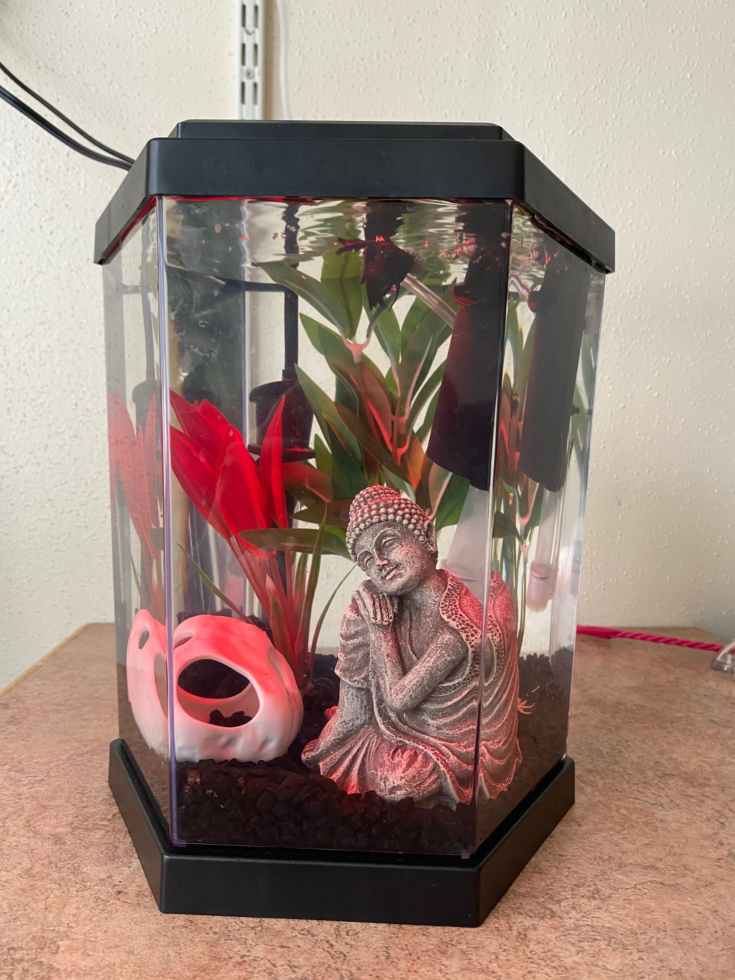 Raven, SU sophomore Ariel Samuel's betta fish, swims in her color-changing tank.