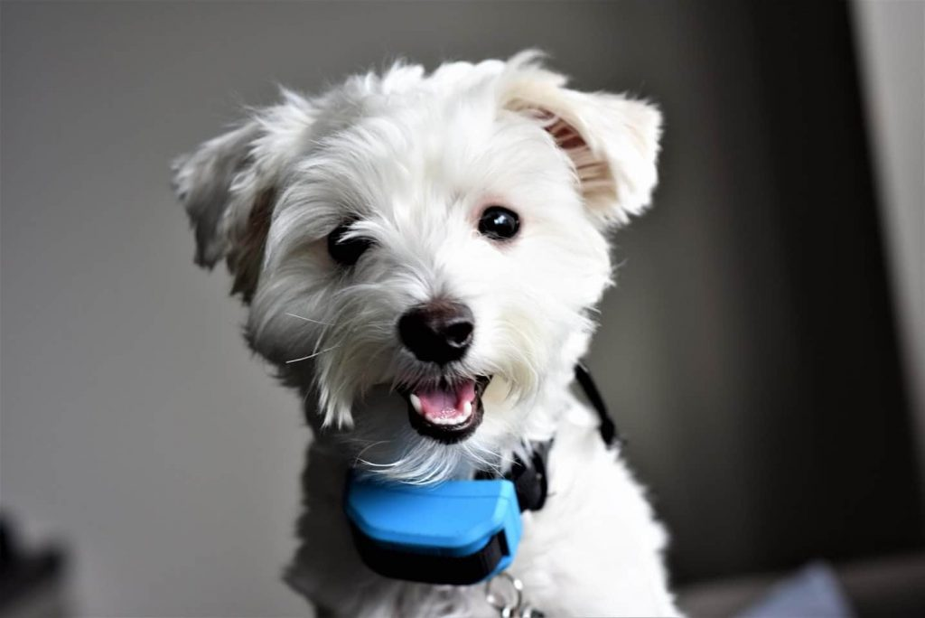 SU student Sanobar Chagani's therapy dog, Ollie