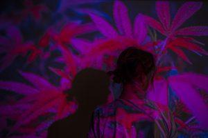 marijuana, weed, cannabis
