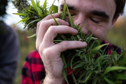 John smells the hemp.