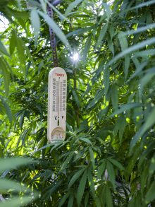 A thermometer measures the temperature of the greenhouse at Surge Laboratory in Geneva.