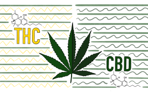 Illustration: THC vs. CBD explainer