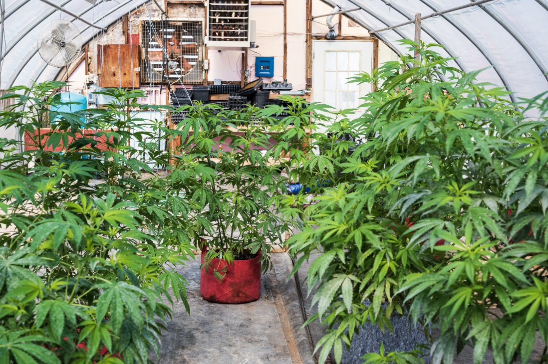 This Veterans Ananda greenhouse is used to house plants in the flowering stage of development.